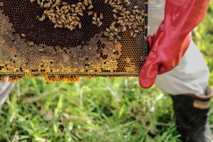 Beekeepers often have questions about health and safety as it relates to bee stings and bee sting allergies.