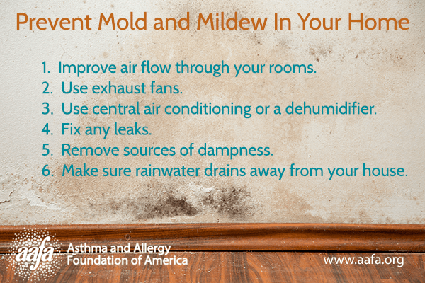 Prevent Mold and Mildew in Your Home