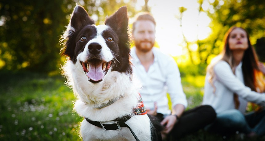 Are you allergic to your furry friend? Learn about functional medicine.